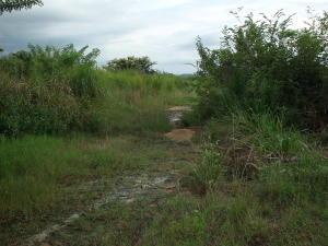 Terreno En Ventaen Yaritagua, Municipio Peña, Venezuela, VE RAH: 18-13388