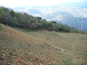 Terreno En Ventaen Carvajal, Santa Ana, Venezuela, VE RAH: 19-2753