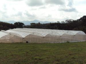 Terreno En Ventaen Nirgua, Sector El Kiosko, Venezuela, VE RAH: 19-5153