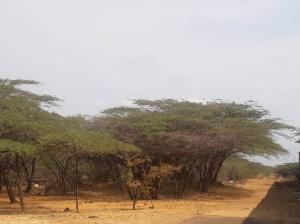 Terreno En Ventaen Punto Fijo, Santa Elena, Venezuela, VE RAH: 19-8863