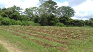 Terreno En Ventaen Municipio Bejuma, Bejuma, Venezuela, VE RAH: 19-14274
