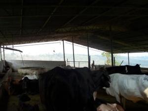 Terreno En Ventaen Escuque, El Alto De Escuque, Venezuela, VE RAH: 20-997