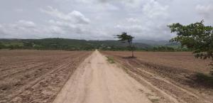 Terreno En Ventaen Yaritagua, Municipio Peña, Venezuela, VE RAH: 20-1925