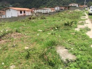 Terreno En Ventaen Valera, Via La Puerta, Venezuela, VE RAH: 20-2840