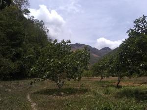 Terreno En Ventaen Duaca, Municipio Crespo, Venezuela, VE RAH: 20-3358