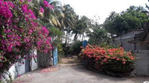 Terreno En Ventaen Boca De Aroa, Boca De Aroa, Venezuela, VE RAH: 20-11041