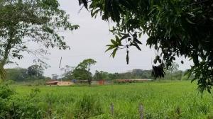 Terreno En Ventaen Carretera Falcón Zulia, Km 42, Venezuela, VE RAH: 20-15394