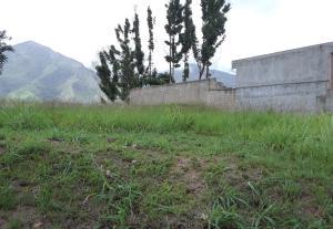 Terreno En Ventaen Municipio Naguanagua, La Entrada, Venezuela, VE RAH: 20-20491