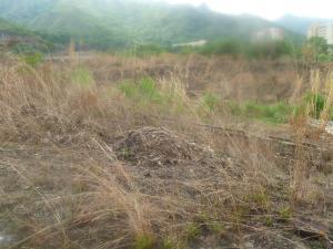 Terreno En Ventaen Municipio Naguanagua, Ciudad Jardin Manongo, Venezuela, VE RAH: 21-14524