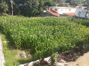 Terreno En Ventaen San Juan De Los Morros, Los Naranjos, Venezuela, VE RAH: 21-23380