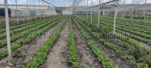 Terreno En Ventaen Quibor, Municipio Jimenez, Venezuela, VE RAH: 22-2162
