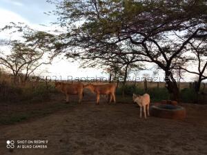 Terreno En Ventaen Carora, Municipio Torres, Venezuela, VE RAH: 22-4990