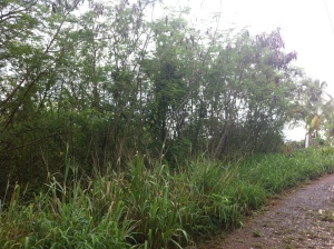 16D Sion Hill QU,