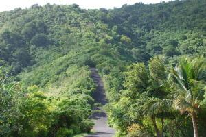 Lush greenery at Prosperity Ridge
