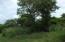 Beautiful big tree on property