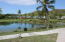 Pond with abundant bird life
