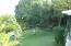 Mango tree in side yard
