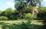 Yard with magnificent Mahogany trees, palms and hundreds of flowering plants