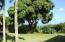 Centuries old mahogany trees lovingly pruned