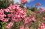 Lovely flowering plants