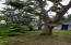 Large trees grace the property