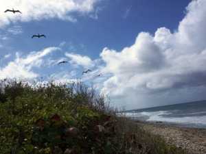 watch the pelicans glide by