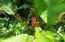 Loads of beautiful tropical plants on property