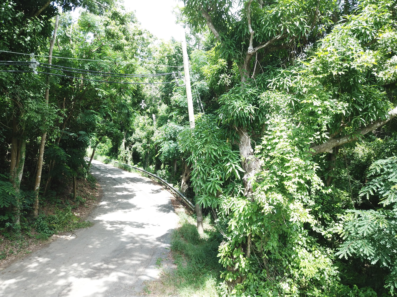 RE/MAX real estate, US Virgin Islands, Orange Grove, New Listing  LotsAcres  Orange Grove WE