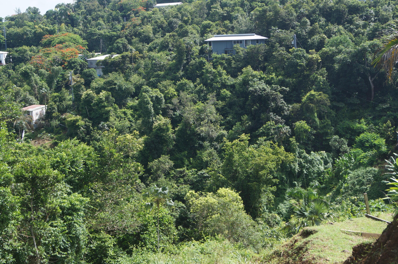 RE/MAX real estate, US Virgin Islands, Pearl, New Listing  LotsAcres  Pearl SS