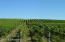 Approx 10 acres of mature vines!