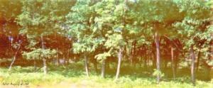EH 94 Spyglass Drive, Hazle Twp, PA 18202