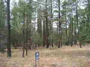 Lot 51A Wild Oak Trail, Pinetop, AZ 85935