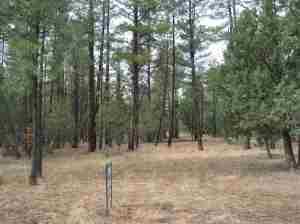 Lot 51C Wild Oak Trail, Pinetop, AZ 85935