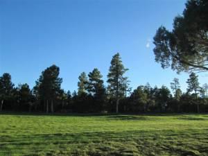 1400 S Thin Leaf Lane, Lot 44 Homestead 1, Show Low, AZ 85901