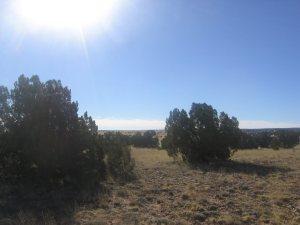 Lot 17 Chevelon Canyon Ranch, 5656 Bangus Rd
