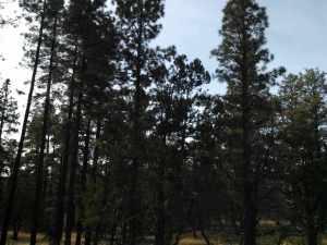4 Acres Porter Mountain And Sponsellor, Lakeside, AZ 85929