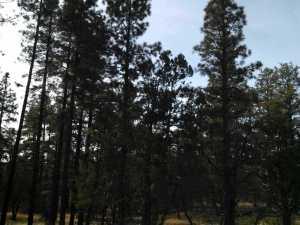 10 Acres Porter Mountain And Sponsellor, Lakeside, AZ 85929