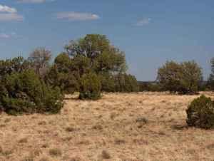Lot 396 Chevelon Canyon Ranch