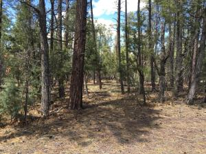 790 W PINE SPRUCE Lane, Pinetop, AZ 85935