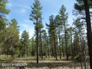 1351 W Walnut Creek Trail, Lakeside, AZ 85929