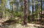 5944 Anvil Circle, Pinetop, AZ 85935