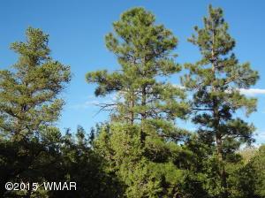 1760 S Canyon Ridge Trail, Show Low, AZ 85901
