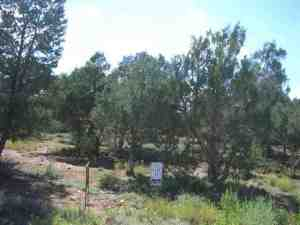 1460 N Hidden Hollow Lane, Lot 19, Show Low, AZ 85901
