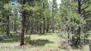 Section 9 Birdsong, Lakeside, AZ 85929