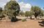 4936 Cemetery Road, Clay Springs, AZ 85923