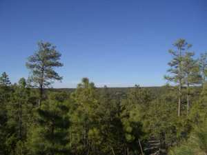3361 Whisper Lane, Lot 48, Heber, AZ 85928