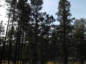 28.79 Acre Porter Mountain & Sponseller Road, Lakeside, AZ 85929