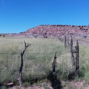 Lot 317 Carrizo Ranch, CR N6157, St. Johns, AZ 85936
