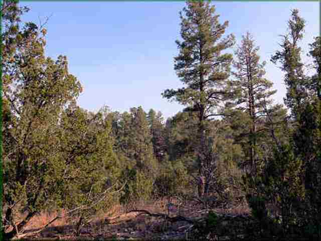This 4.7 acre parcel is located in the Buckskin Artist Community which is a one acre lot, site built homes only subdivision. The property is gently sloping and loaded with pines. Water and electric are there. $32,500 for 1 acre or all 4.7 acres for $130,000. Modest H.O.A. dues of $350 per year include water. This is a rare find, come see this today! This price offering is for 1 acre at $32,500.