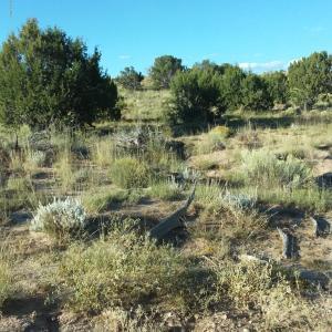 Lot 713 Woodland Valley Ranch, Rose Rd, St. Johns, AZ 85936